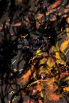 Vuilboom en vuurvliegjes, print, '17 - Marjan Pennings