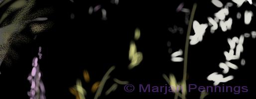 De Jasmijn in de nacht