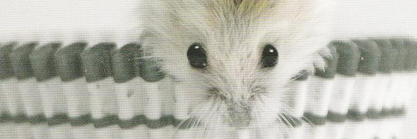 Het voornemen van de muis - Toon Tellegen